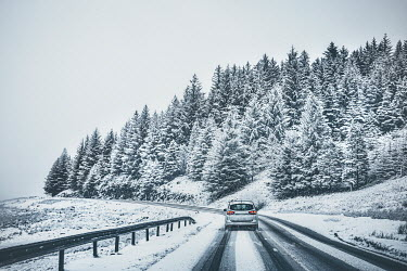 Evelina Kremsdorf CAR ON SNOWY ROAD WITH FIR TREES Cars