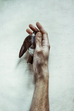 Natasza Fiedotjew Hand of man embracing dead bird