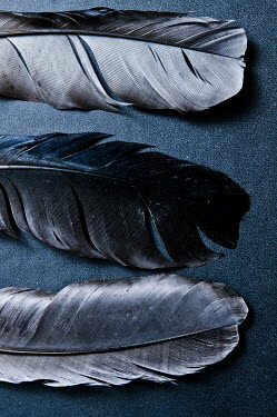 Valentino Sani CLOSE UP OF THREE GREY FEATHERS Miscellaneous Objects