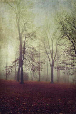 Dirk Wustenhagen TREES IN FOG WITH AUTUMN LEAVES Trees/Forest