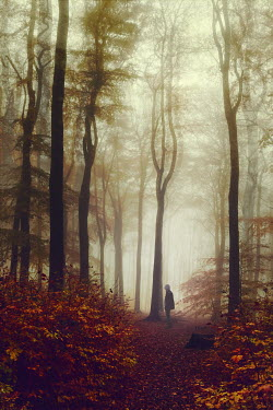 Dirk Wustenhagen MAN STANDING IN FOGGY AUTUMN FOREST Men