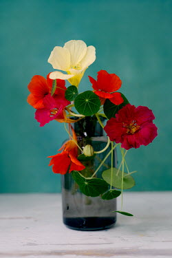 Magdalena Wasiczek NASTURTIUM FLOWERS AND LEAVES IN GLASS BOTTLE Flowers