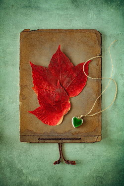 Magdalena Wasiczek LEAVES AND NECKLACE ON OLD PHOTO ALBUM Miscellaneous Objects