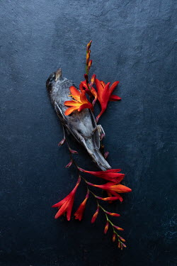 Matilda Delves DEAD BIRD WITH RED FLOWERS Birds