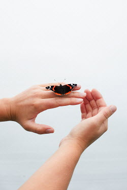 Matilda Delves BUTTERFLY ON FEMALE HANDS Insects