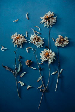 Magdalena Wasiczek WITHERED FLOWERS WITH SCATTERED PETALS Flowers