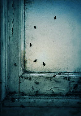 Lyn Randle FLIES ON OLD DIRTY FLAKING WINDOW Insects