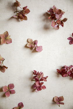 Miguel Sobreira SCATTERED SMALL PINK FLOWERS Flowers