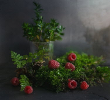 Andreeva Svoboda RASPBERRIES WITH PLANT AND LEAVES Flowers