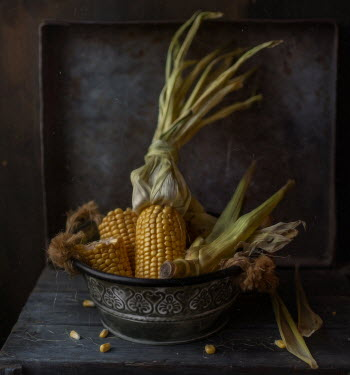 Andreeva Svoboda CORN COBS IN METAL BOWL ON TABLE Miscellaneous Objects
