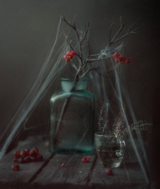 Andreeva Svoboda BERRIES AND HEATHER COVERED WITH COBWEBS Miscellaneous Objects