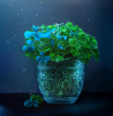 Andreeva Svoboda CLOVER LEAVES IN GLASS VASE Flowers