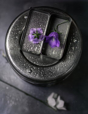 Andreeva Svoboda PURPLE FLOWER IN METAL BOX WITH RAINDROPS Flowers