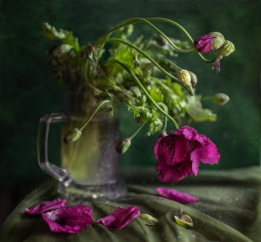 Andreeva Svoboda WILTING PINK POPPIES IN SILVER TANKARD Flowers