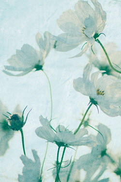 Liz Dalziel WHITE FLOWERS OUTDOORS IN SUNLIGHT Flowers/Plants