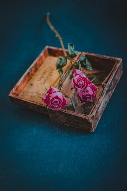 Magdalena Wasiczek DRIED PINK ROSES IN OLD BOX Flowers