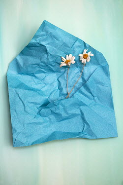 Alison Archinuk TWO DAISIES ON CRUMPLED TURQUOISE ENVELOPE Flowers