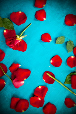 Miguel Sobreira SCATTERED RED ROSES AND PETALS ON TURQUOISE SURFACE Flowers