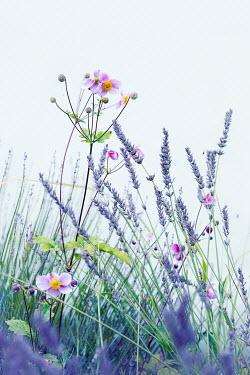 Magdalena Wasiczek Spring flowers