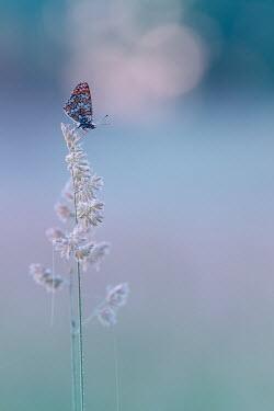 Magdalena Wasiczek Butterfly on flower
