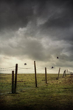 Silas Manhood BARBED WIRE FENCE AND POSTS IN STORMY COUNTRYSIDE Gates