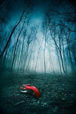 Silas Manhood FEMALE SHOE LYING ON GROUND IN WINTRY FOREST Miscellaneous Objects