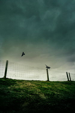 Silas Manhood BROKEN WIRE FENCE IN STORMY COUNTRYSIDE Gates