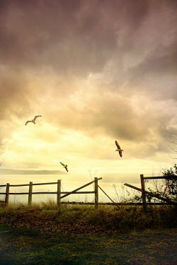Silas Manhood BROKEN FENCE WITH SEAGULLS BY SUNLIT SEA Seascapes/Beaches
