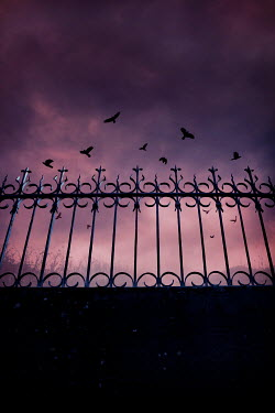 Silas Manhood WROUGHT IRON RAILINGS WITH BIRDS AT SUNSET Gates