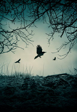 Silas Manhood FLYING BIRDS WITH TREES AND FROSTY GROUND Birds