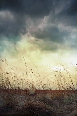 Silas Manhood FIELD WITH GRASS SUNLIGHT AND STORMY CLOUDS Fields