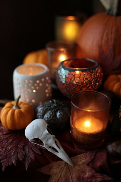 Holly Leedham Bird skull, candles, and pumpkins