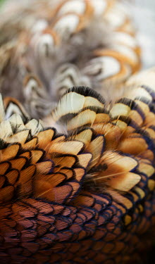 Holly Leedham Close up of bird feathers