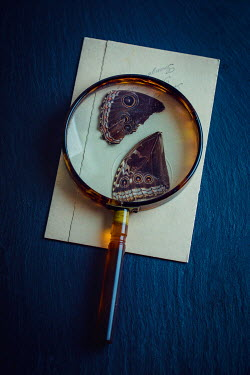 Magdalena Wasiczek BUTTERFLY WINGS BENEATH MAGNIFYING GLASS Miscellaneous Objects