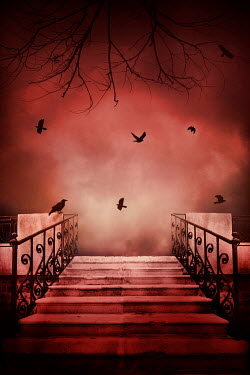 Silas Manhood STEPS WITH WINTRY TREE AND RED SKY Stairs/Steps