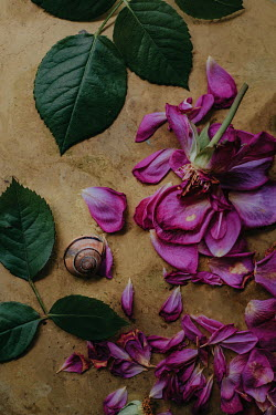 Magdalena Wasiczek Purple flowers and petals with snail