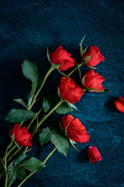 Magdalena Wasiczek Red roses on blue background