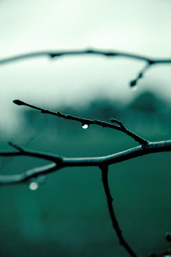Miguel Sobreira Water droplets on branch