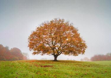 Adrian Leslie Campfield Autumn tree on hill under fog