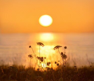 Adrian Leslie Campfield Flowers by sea at sunset