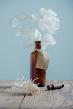 Magdalena Wasiczek Sea shell and leaves in vase