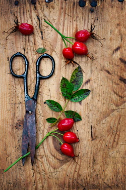 Magdalena Wasiczek Scissors with red berries on wood