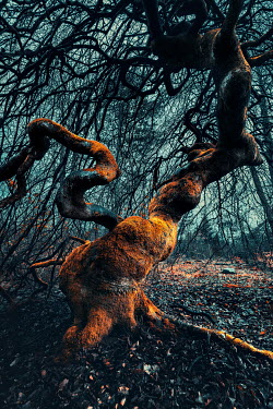 David Keochkerian TWISTED TREE AND BRANCHES IN COUNTRYSIDE Trees/Forest