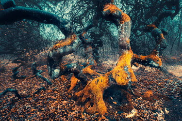 David Keochkerian TWISTED TREE COVERED WITH LICHEN IN COUNTRYSIDE Trees/Forest