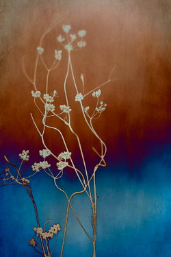 Magdalena Wasiczek DELICATE WHITE FLOWERS WITH ABSTRACT BACKGROUND Flowers