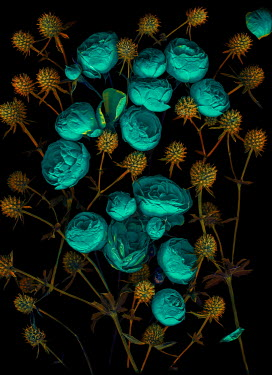 Magdalena Wasiczek GREEN PEONIES AND YELLOW THISTLES Flowers