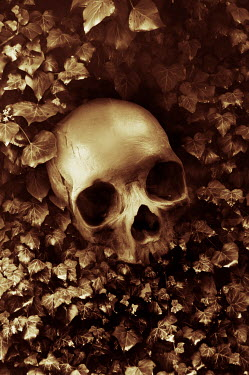 Valentino Sani HUMAN SKULL LYING ON IVY OUTDOORS Miscellaneous Objects