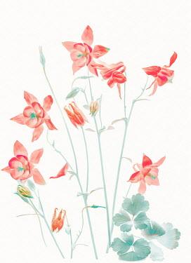 Magdalena Wasiczek RED FLOWERS Flowers