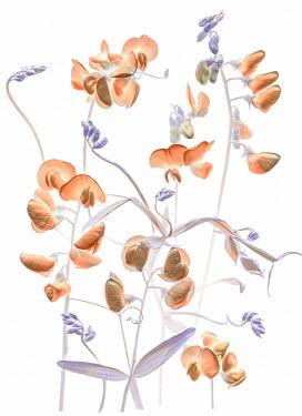Magdalena Wasiczek blue and orange flowers Flowers