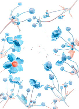 Magdalena Wasiczek FRAME OF BLUE POPPIES WITH SEEDS Flowers